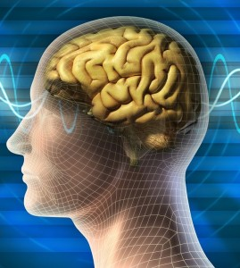 mozgani-clovek