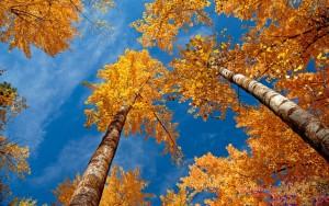 drevesa-nebo