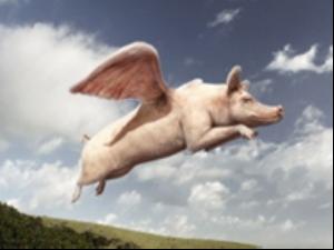 leteca-svinja
