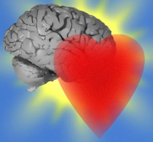 srce-mozgani