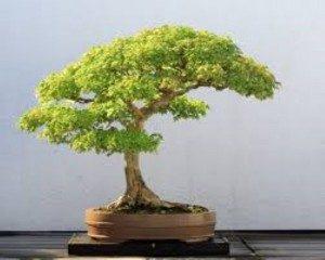 malo-drevo