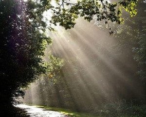svetloba-gozd